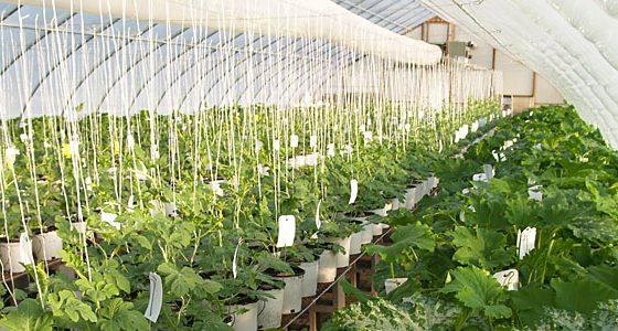 Crops & Innovation